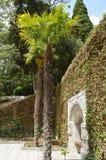 Tropiska trädgårdar för härligt hemtrevligt område med hög palmami Royaltyfri Foto