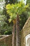 Tropiska trädgårdar för härligt hemtrevligt område med hög palmami Royaltyfri Bild