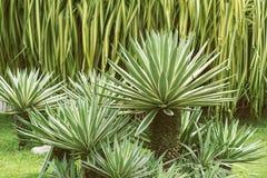 Tropiska trädgårds- växter Arkivbild