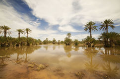 tropiska trees Fotografering för Bildbyråer