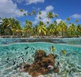 Tropiska undervattens- kusthavsanemoner och fisk fotografering för bildbyråer