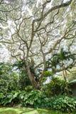 Tropiska växter   Arkivfoton
