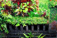 Tropiska växter för fantasi i mossig trädgård Arkivfoton