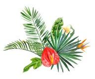 Tropiska växter för vattenfärg för dina designer Royaltyfri Foto