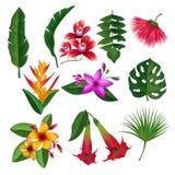 Tropiska växter hawaii blommar sidor och filialer Vektorillustrationisolat på vit bakgrund stock illustrationer