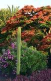 Tropiska växter i trädgården Arkivfoton