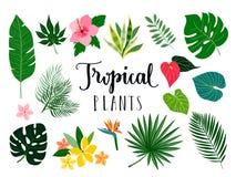 Tropiska växter och blommasamling Arkivbilder