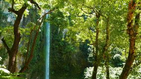 tropiska vattenfall lager videofilmer
