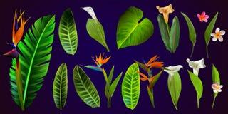 Tropiska vektorblommor kort med den blom- illustrationen Bukett av blommor med det exotiska bladet som isoleras på vit bakgrund stock illustrationer