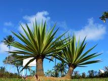 tropiskt royaltyfria bilder