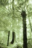 tropiskt Royaltyfri Bild