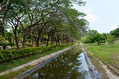tropiskt Royaltyfri Fotografi