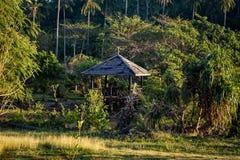 Tropiskt aftonljus med träkojan och palmtree Fotografering för Bildbyråer