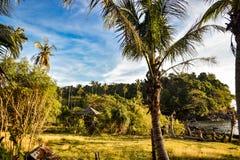 Tropiskt aftonljus med träkojan och palmtree Arkivfoton