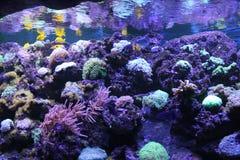 tropiskt akvarium arkivfoto
