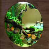 Tropiskt akvarium med den färgrika fisken Arkivfoto