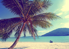 Tropiskt begrepp för ferie för strand för öpalmträdparadis Arkivfoto