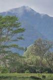 Tropiskt berg med moln Arkivfoto