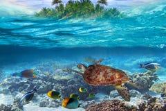 Tropiskt bevattna dykning arkivbilder