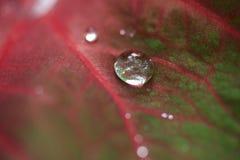 Tropiskt blad med regndroppar arkivbilder