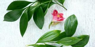 Tropiskt blad och blomma Den blom- lägenheten lägger på den lantliga bakgrunden Bästa sikt för naturlig ram arkivfoto
