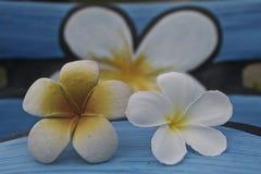 Tropiskt blommaland Royaltyfria Foton