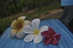 Tropiskt blommaland Royaltyfri Foto