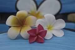 Tropiskt blommaland Arkivbilder