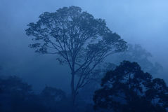 tropiskt dimmigt regn för skog Arkivfoto
