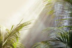 Tropiskt - djungeln parkerar i Palma, Mallorca Arkivfoto