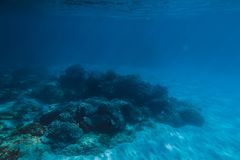 Tropiskt djurliv med koraller och sand är undervattens- Havsliv i Stilla havet arkivfoto