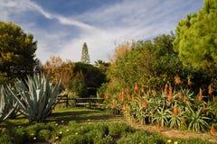 Tropiskt exotiskt parkerar med kaktusaloe vera och träd i blå himmel, algarve, södra Portugal Royaltyfri Fotografi