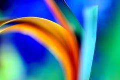 Tropiskt färgat abstrakt begrepp Royaltyfri Foto