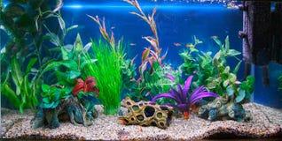 Tropiskt fiskbehållareakvarium Arkivfoton