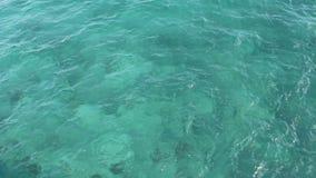 Tropiskt Florida havvatten lager videofilmer