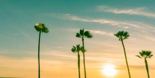 Tropiskt gömma i handflatan längs kaliforniska stränder Arkivbilder
