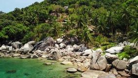 Tropiskt gömma i handflatan och stenar på den lilla stranden Många grönt exotiskt gömma i handflatan att växa på stenig kust nära arkivfilmer