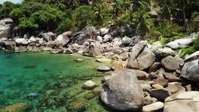 Tropiskt gömma i handflatan och stenar på den lilla stranden Många grönt exotiskt gömma i handflatan att växa på stenig kust nära stock video