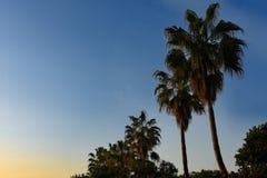 Tropiskt gömma i handflatan på solnedgångbakgrund royaltyfri fotografi