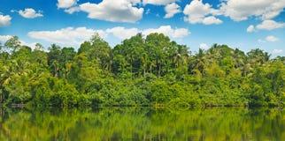 Tropiskt gömma i handflatan skogen på flodbanken Brett foto royaltyfri fotografi