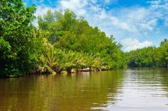 Tropiskt g?mma i handflatan skogen p? flodbanken Sri Lanka arkivfoto