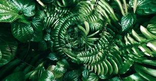 Tropiskt grönt blad i mörk signal arkivbild