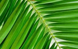 Tropiskt grönt blad, sidor, grön tropisk bakgrund, semester Arkivfoto