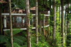 tropiskt grönt hus Arkivbilder