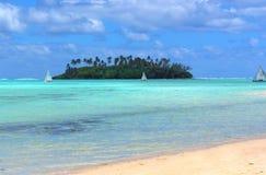 tropiskt gyckel Arkivbild
