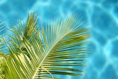 tropiskt hav Arkivfoto