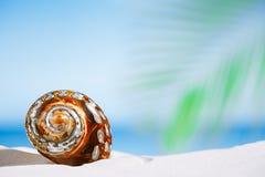 Tropiskt havsskal på vit Florida strandsand under sollien arkivfoton