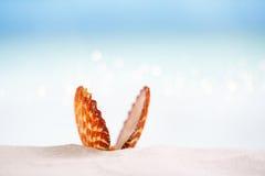 Tropiskt havsskal på vit Florida strandsand under sollien royaltyfria bilder