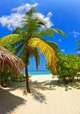 tropiskt hotell arkivbild