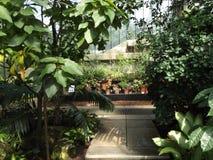 tropiskt hus Arkivfoto